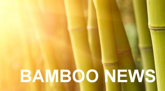 FB-bamboo-background-003