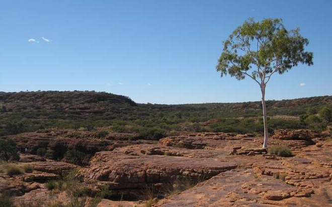 tree outback